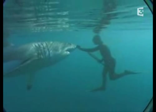 ホホジロザメの画像 p1_10